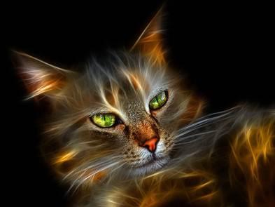 http://www.elisabeth-licata.com/images/gato.png